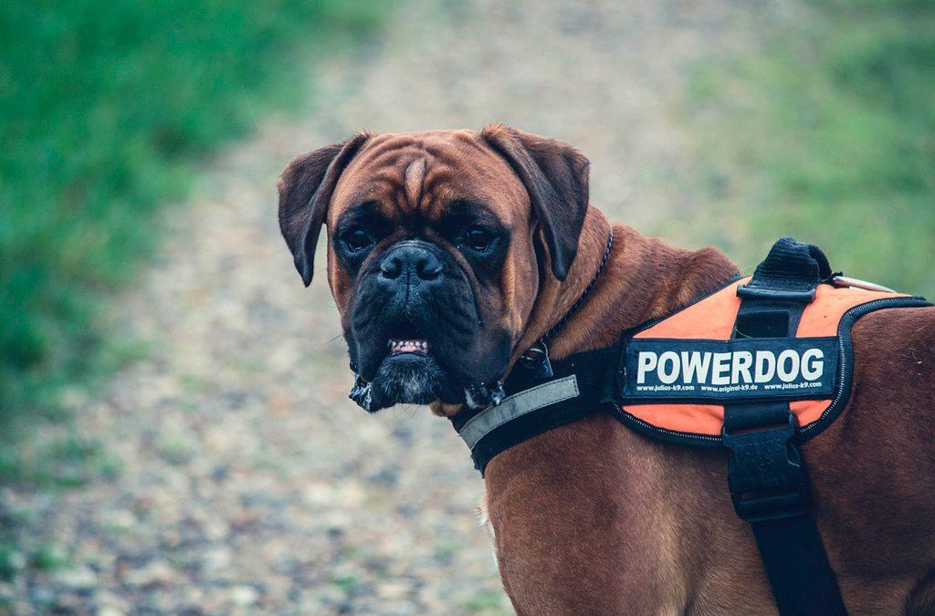 ¿Qué obligaciones administrativas supone tener un perro como animal de compañía?
